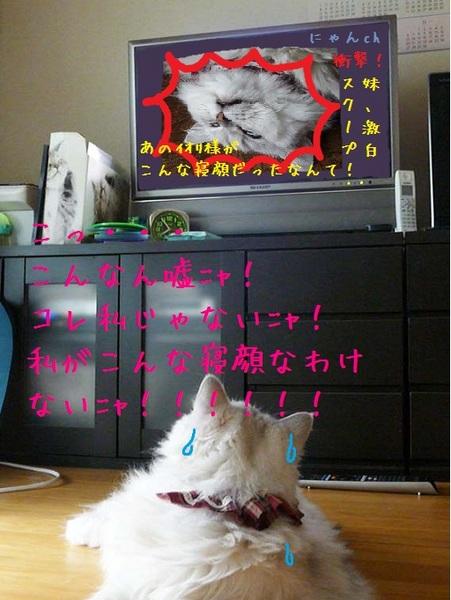 ちがう.jpg