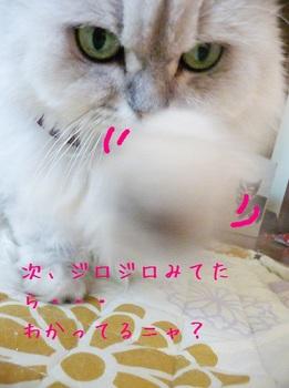 ねこぱんち.jpg