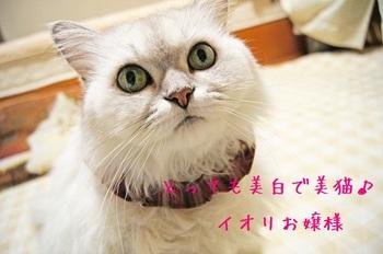 紹介イオリちゃん.jpg