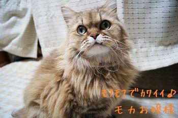 紹介モカちゃん.jpg